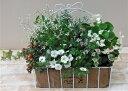 【寄せ植え】季節の寄せ植え/季節の花苗/籠植え[100-3017-3] 寄植/プロの寄せ植え/プレゼント/誕生日/母の日/父の日/ギフト/お祝い/贈…
