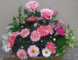 【寄せ植え】季節の寄せ植え/季節の花苗/鉢植え[100-3013-1]プロの寄せ植え/プレゼント/誕生日/母の日/父の日/ギフト/お祝い/贈り物/おしゃれ/かわいい/ファイバーストーン(194-912M-70)
