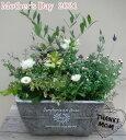 【オリーブの寄せ植え】寄せ植え/季節の寄せ植え/季節の花苗/鉢植え[100-3014-14] 寄植/プロの寄せ植え/プレゼント/誕生日/母の日/父の…