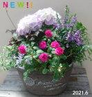 【寄せ植え】季節の寄せ植え/季節の花苗/鉢植え[100-3016-12]プロの寄せ植え/プレゼント/誕生日/母の日/父の日/ギフト/お祝い/贈り物/おしゃれ/かわいい/ファイバーストーン(194-953M-70)