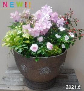 【寄せ植え】季節の寄せ植え/季節の花苗/鉢植え[100-3016-13] プロの寄せ植え/プレゼント/誕生日/母の日/父の日/ギフト/お祝い/贈り物/おしゃれ/かわいい/ファイバーストーン(194-791L2-70s)