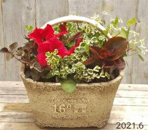 【寄せ植え】季節の寄せ植え/季節の花苗/鉢植え[100-3014-3] プロの寄せ植え/プレゼント/誕生日/母の日/父の日/ギフト/お祝い/贈り物/おしゃれ/かわいい/ファイバーストーン(194-944S-92)