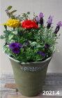 【寄せ植え】季節の寄せ植え/季節の花苗/鉢植え[100-3016-9]プロの寄せ植え/プレゼント/誕生日/母の日/父の日/ギフト/お祝い/贈り物/おしゃれ/かわいい/ファイバーストーン(194-722M-78s)