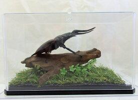 ギラファノコギリ♂100(レプリカ標本)