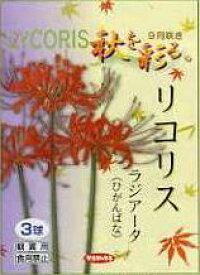 日本国内 送料無料♪♪・・ひがんばな・リコリス ラジアータ赤花 12球セット おしゃれ草丈:40〜50cm