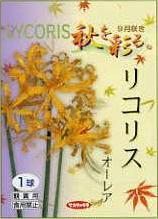 秋咲き球根 ひがんばな 発送始めましたリコリス オーレア黄花 6球セットおしゃれ送料無料:本州・四国・九州地区限定(球根の同梱は可能です。)