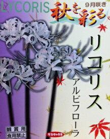 日本国内送料無料♪♪・・ひがんばな リコリスアルビフローラ やや大ぶりな乳白色4球セット おしゃれ草丈:50〜60cm