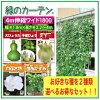 【送料無料】緑のカーテンW18004m伸縮立掛けタイプ2種選べる種付き!