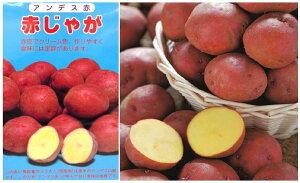 送料無料春植え馬鈴薯アンデス赤 岡山県産 二期性ジャガイモ 赤じゃがいも M・Sサイズ 20kg入り出荷販売中です。♪♪・・・送料無料:本州・四国・九州地区限定