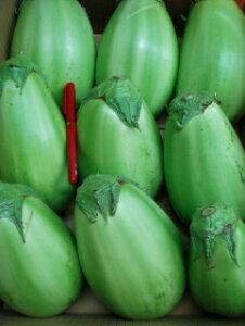 【送料無料】仲卸おすすめ厳選限定厳選品やわらかくて美味しい!青茄子約5kg箱7〜15個入り 青なす あおなす