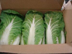 滋賀県産 とても美味しい白菜2L6玉入り13kg以上