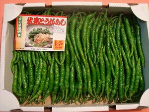 京都中央卸売市場中西青果仲卸直送だから新鮮!京野菜仲卸中西青果店主厳選最高品伏見甘長とうがらし1kgふしみあまながとうがらし、伏見唐辛子、伏見とうがらし