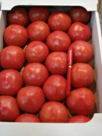 【京都直送】【送料無料】京野菜の卸屋さん店長おすすめ美味しい京トマト3kg以上(30玉〜18玉入)