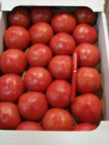【送料無料】【京都直送】京野菜の卸屋さん店長おすすめ美味しい京トマト3kg以上(30玉〜18玉入)