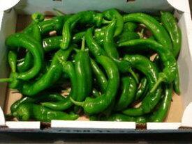 京都直送京野菜極上品訳ありほんまもん万願寺唐辛子1kg曲がり 大きさ不揃い