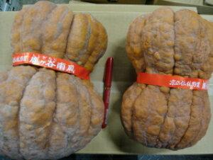 京都直送仲卸中西青果厳選京野菜鹿ケ谷かぼちゃ(ししがたにかぼちゃ)2Lサイズ1個(2kg以上)