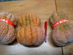 京都直送仲卸中西青果厳選京野菜鹿ケ谷かぼちゃ(ししがたにかぼちゃ)Lサイズ1個(1.5kg以上)