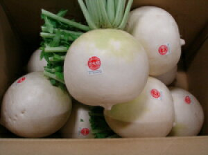 お買得京野菜聖護院大根の中でも最高級品質の淀大根仲卸おすすめ生産者限定品お徳用訳あり大箱売り8玉で12キログラム以上入り