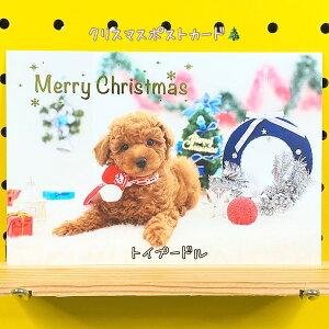 クリスマスポストカード・トイプードル