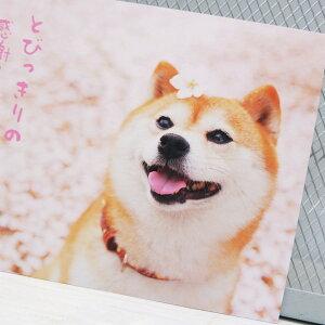 春の優しい景色を柴犬とともにお届けします柴犬ポストカードとびっきりの感謝をこめて「ありがとう」