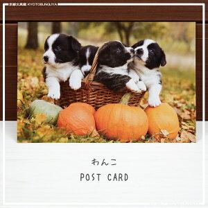 可愛らしい子犬たちの姿を情緒あふれる秋の景色と共にお届けしますわんこポストカード・秋かぼちゃ