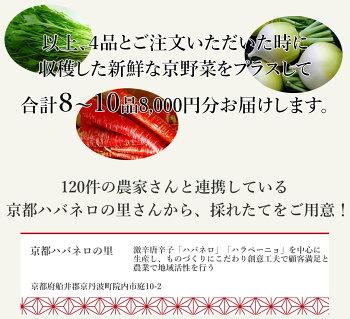 【2月限定販売旬の京野菜セット金時さつま芋京ほうれん草京きく菜京小松菜が必ず入る8〜10品8,000円コース】さつまいもほうれんそう菊菜こまつな京野菜旬2月の旬京都産野菜