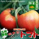 宮崎産桃太郎トマト(2玉大玉サイズ)|タマチャンショップ 野菜 南九州産 やさい お取り寄せ おとりよせ 九州野菜 国…