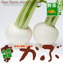 【九州 野菜】九州産かぶ1株(カブ)はなまるでも紹介されたカブには、胃腸を温め淡色野菜でビタミンCを多く含み、でん…