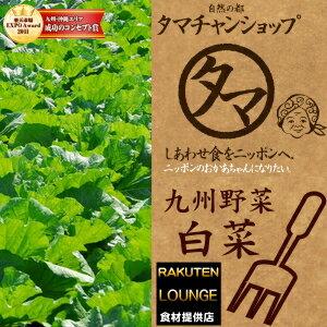 白菜-自然の都タマチャンショップ