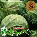 【野菜/九州】九州産キャベツ(1玉)シャキッと旨い九州自慢の元気野菜!九州から新鮮・激安特価でお届け致します!【…