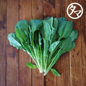 【九州 野菜】ほうれん草(1袋)九州産ほうれんそう/ホウレンソウ美味しくて緑黄食野菜の代表と言われるほどずば抜けた栄養の高い野菜(ほうれん草) 南九州産 やさい お取り寄せ おとりよせ