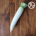 宮崎県産 都城 大根1本-葉なし新鮮採れたて川路畑の美味しい大根(ダイコン)大根の根にはでんぷん分解酵素のアミラー…