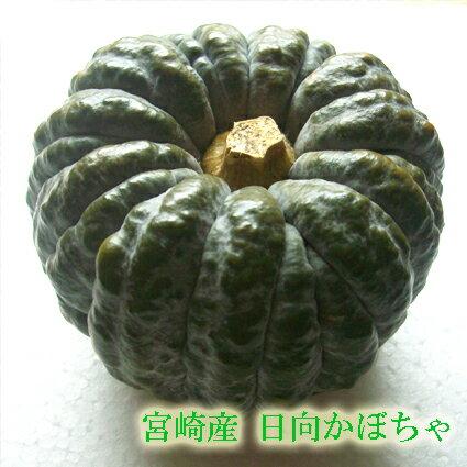 【宮崎産 新鮮野菜】宮崎産日向かぼちゃ(黒皮かぼちゃ)