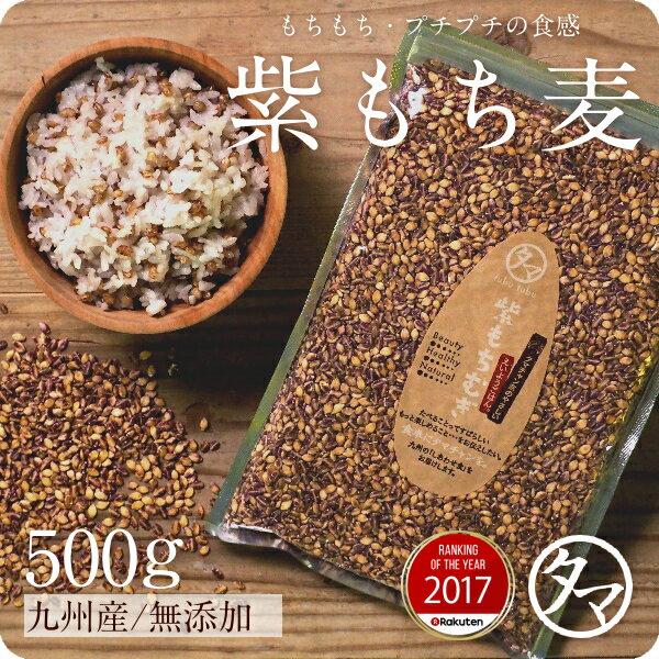 【送料無料】超希少な紫もち麦500g(九州産/30年度産)紫が濃い状態で収穫したもち麦です。もち麦に比べてポリフェノールの1種、アントシアニジンを多く含み、より一層もちもちぷちぷちの食感が楽しめます【国産 もち麦/無添加/ダイシモチ/モチムギ】