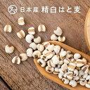 【送料無料】九州産精白はとむぎ500g(250g×2袋)食べる美容食材としてヘルシーな美容穀物です!☆食物繊維・必須ア…