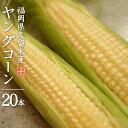 【5月7日より発送予定】【数量限定】福岡県ヤングコーン 1箱20本入り 久留米産 とうもろこし【送料無料】