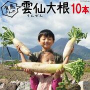雲仙だいこん【送料無料】10本