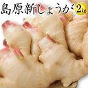 【8月下旬より順次発送】【送料無料】新しょうが 令和元年【新生姜】新しょうが2kg 【長崎県産 ショウガ】甘酢漬けな…