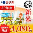 (送料無料)【無洗米】(29年産新米)鹿児島県産イクヒカリ5kg×2袋 【10kg】