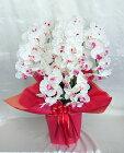 アーティフィシャルフラワー「造花」の光触媒コーティング【胡蝶蘭鉢植え・5本立(W/R)】(※先端まで花が付いています)