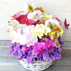令和アレンジ 【花 蘭 アレンジメント 華やかアレンジ お祝い 開店祝い 新築祝い 展覧会 令和】