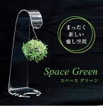 スペースグリーンエアープランツを飾ろう