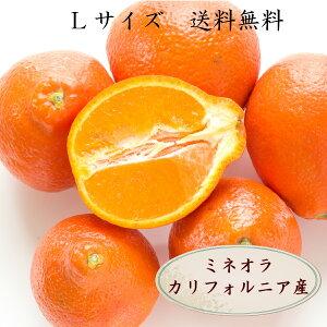 ミネオラタンジェロ 10玉 ミネオラ オレンジ Lサイズ アメリカ産 カルフォルニア産 お試し 送料無料 訳ありではありません
