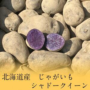 北海道産 シャドークイーン 紫 パープル カラフル じゃがいも 6kg ジャガイモ じゃが芋 希少【ラッキーシール対応】