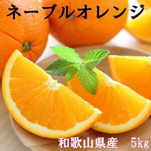 【国産】ネーブルオレンジ 5kg ネーブル オレンジ 国産オレンジ 和歌山県産 シェア用 贈答品用 送料無料 訳ありではありません