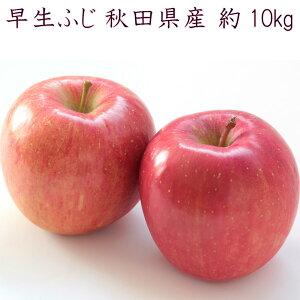 【秀10キロ】リンゴ 早生ふじ 昂林 やたか 10kg りんご 林檎 早生 ふじ 秋田県産 ご家庭用 シェア用 贈答品用 送料無料 訳ありではありません