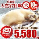 夏輝 牡蠣 カキ 天然岩牡蠣(活)300〜390g前後 ×10個 鳥取産 朝採れ 刺身用 !(岩ガキ/岩がき)送料無料