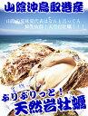 天然岩牡蠣 夏輝(生食用)牡蠣(活)大300g〜390前後 ×5個セット 殻割り対応可!鳥取産 朝採れ 刺身用 送料無料(岩ガキ/岩がき)