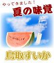 鳥取すいか《送料無料》優品 大6〜8キロ!スイカの本場鳥取県産フルーツ 贈り物 送料無料 ランキングお取り寄せ