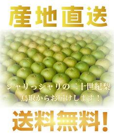鳥取県産 二十世紀梨 L〜3Lサイズ 10kg詰 梨ご自宅用 梨(訳あり)送料無料 !